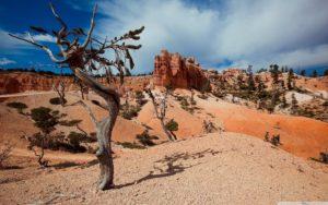 desert_tree